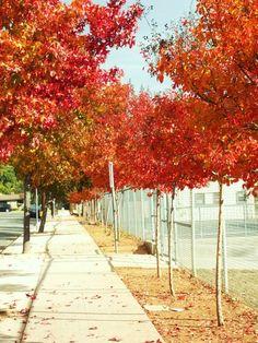 Autumn in Altadena....CALIFORNIA!