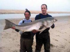 Big Bass: 52-Pound Striper Breaks Delaware State Record | Field & Stream