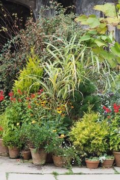 Easy-care evergreen pots to add interest and structure to your garden all year round. plant choices for evergreen trees, shrubs and grasses for pots. Clematis, Grasses For Pots, Container Plants, Container Gardening, Landscape Design, Garden Design, Natural Pesticides, Low Maintenance Garden, Small Gardens