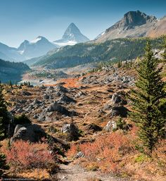 trail to Mt. Assiniboine in Canada