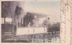 Japan Yokohama Girls In A Tea House and Wisterias In Bloom -1906