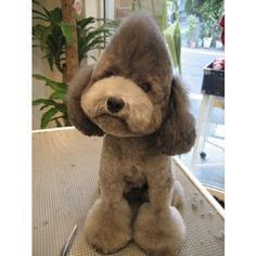 poodle haircuts - Google Search