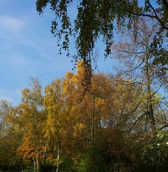 Goldbaum....... Herbst 2015