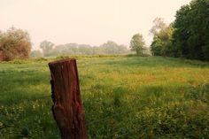 Photo Sunny afternoon by Bernie Lamberz on 500px