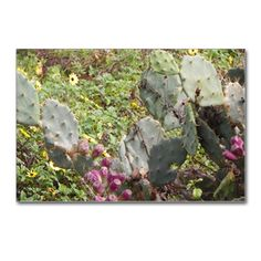 FLORIDA CACTUS Postcards (Package of 8)