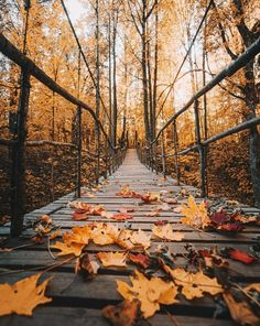 path in the autumn park leaves bottom view - beautiful images and wallpapers Autumn Scenes, Autumn Cozy, Autumn Fall, Autumn Nature, Autumn Forest, Autumn Aesthetic, Fall Wallpaper, Wallpaper Desktop, Fall Pictures