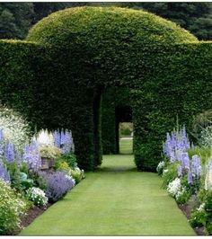Yew Hedging Arches