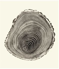Woodcuts Provide Visual Record of Life in the Forest | Visual Science | Discover Magazine Bryan Nash Gill cuts blocks for unique ink relief prints.