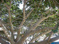Tree web 2