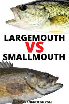 Bass Fishing Bait, Trout Fishing Tips, Fishing Tools, Fishing Life, Fishing Humor, Best Fishing, Fishing 101, Fishing Stuff, Lake Erie Fishing