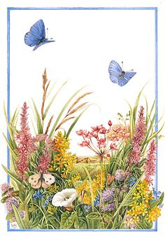 Marjolein Bastin Nature Sketches, Summer flowers and blue butterflies