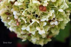 photos de fleur Fruit, Photos, Food, Flowers, Pictures, Photographs, Meals, Cake Smash Pictures