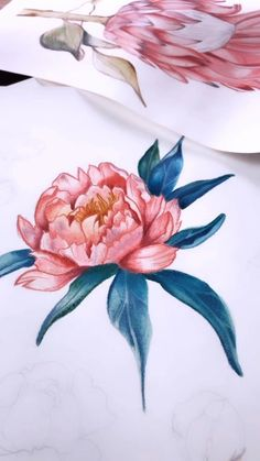 Pencil and Watercolour painting of a peony using watercolours Watercolor Paintings For Beginners, Peony Painting, Gouache Painting, Watercolor Techniques, Lotus Painting, Watercolour Paintings, Watercolours, Watercolor Flowers Tutorial, Floral Watercolor
