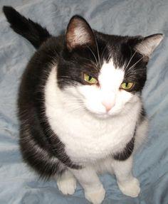 meowww Babies, Cats, Animals, Gatos, Animales, Babys, Animaux, Newborn Babies, Baby Baby