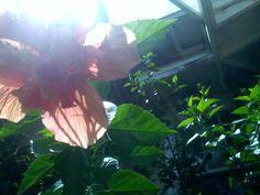 hibiscus and sunshine