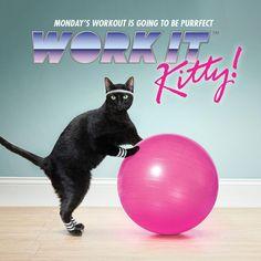 Exercises For Your Cat [VIDEO] - CatBistro - StyleBistro