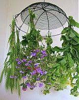 Nábytok - veľký sušiak na bylinky, kvety... - 4020551_