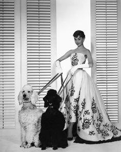 "Audrey Hepburn with her Standard Poodles in the movie ""Sabrina"" 1954."