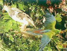 Museo de las Aves in Saltillo, Coahuila, Mexico - Tour By Mexico ® http://www.tourbymexico.com/coahuila/saltillo/saltillo.htm
