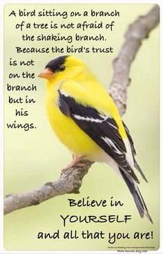 Believe in yourself | Strength | Never give up | Birds | Love yourself enough: Believe in yourself and all that you are.