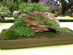 Moss Dish Garden The fern and mossery: moss monday: bonsai of the japanese