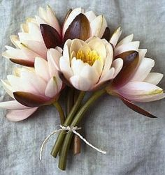 lotus flower bouquet wedding - Google Search
