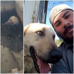 Meet Rocky the dog I rescued from a oil sump & given a 2nd chance at being a good boy