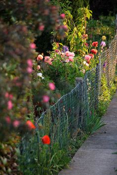 THIS year I'm going to cordon the flowers off with the old wire fences like this.