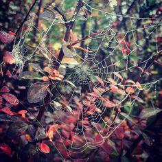 #autumn #nature #drops #spiderweb #autumn#color