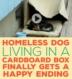 Homeless Dog Living In A Cardboard Box FINALLY Gets A Happy Ending!