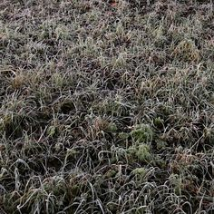 """Ice grass. #nature #ice #grass #winter #snow #cold"""