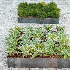 Landscape mid century modern garden design ideas pictures for Low maintenance plants for garden beds