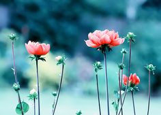 Image shared by seaside carnival. Find images and videos about pretty, pink and nature on We Heart It - the app to get lost in what you love. Wild Flowers, Beautiful Flowers, Flowers Nature, Beautiful Things, Winter Flowers, Simple Flowers, Simply Beautiful, Colorful Flowers, Pretty Landscapes