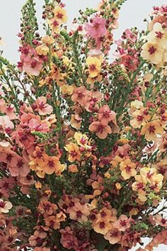 Spectacular Perennials for a Cutting Flower Garden Landscape! Have you thought about creating your own cutting flower garden? A private cutting flower garden for your use only. Where you grow the… Shade Perennials, Flowers Perennials, Planting Flowers, Shade Flowers Perennial, Part Sun Perennials, Perrenial Flowers, Shade Shrubs, Cut Flower Garden, Flower Farm