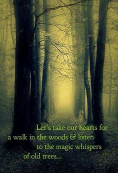 "let us take our hearts for a walk in the woods & listen to the magic whisper of old trees. via ""The Smart Witch"" on fb Into The Woods Quotes, Walk In The Woods, Life Quotes Love, Quotes To Live By, Heart Quotes, Wisdom Quotes, Old Soul Quotes, Wiccan Quotes, Time Quotes"