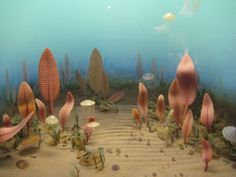 """Diorama showing life in the """"Ediacaran Sea"""". The animals depicted ..."""