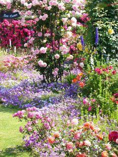 宮崎のローズガーデン  ≪バラの木≫ | So-netブログ                                                                                                                                                                                 もっと見る