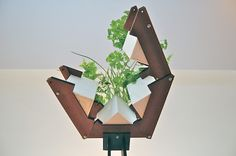 A window garden for herbs using passive hydroponics.