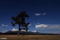 A tree stands in the foregrounds of Mount Krivan (2494 m),... #vychodna: A tree stands in the foregrounds of Mount Krivan (2494… #vychodna