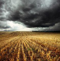 La face sombre du blé : Nouvelles perspectives sur la maladie coeliaque et l'intolérance au blé - Santé Nutrition