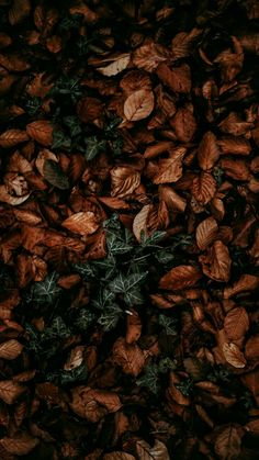Get Great Fall Wallpaper for iPhone XS Max Fall Wallpaper, Trendy Wallpaper, Flower Wallpaper, Nature Wallpaper, Screen Wallpaper, Mobile Wallpaper, Cute Wallpapers, Autumn Leaves Wallpaper, Crazy Wallpaper