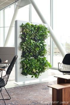 LivingDividers help reduce ambient noise and of course create all the health benefits of plants. GREAT FOR OFFICES!
