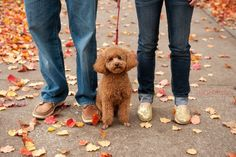 engagement-photography-with-dogs-stacy-able