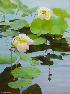 """A Wink and a Nod by Sheri Farabaugh Oil ~ 24"""" x 18"""" Watercolor Artwork, Watercolor Landscape, Watercolor Illustration, Watercolor Flowers, Pond Painting, Lily Painting, Jungle Art, Lotus Art, Water Art"""