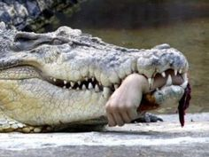 Top 10 Crocodile Attack And Kill Human Compilation [interesting World]