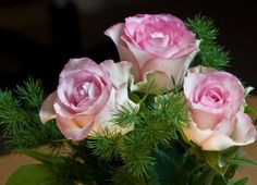 Gyönyörű rózsa Neked!