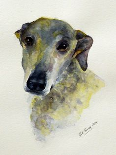 Sam, a beautiful greyhound face. Watercolour.