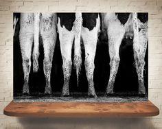 Farm Wall Art horse photograph - fine art print - black & white photography