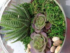 Succulent terrarium plant idea! I wish I could make a terrarium this pretty!