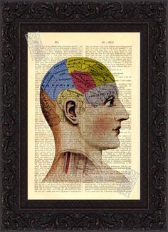 Antique Phrenology Head Anatomical Colour Print by ForgottenPages
